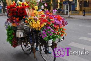 Flores y Gracias